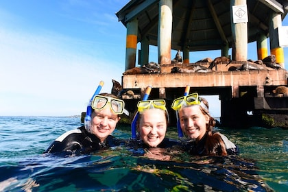 Three people pose with snorkels at the surface