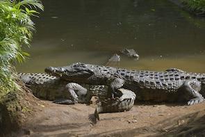Half day visit to la Vanille Crocodile Park