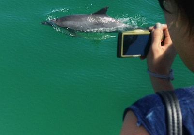 Person taking a photo of a dolphin swimming past boat in New South Wales