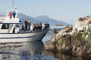 Beagle Channel Yacht Sailing Tour