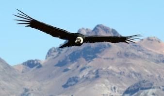 Full-Day Hiking Tour - Flight of Condor Chonta