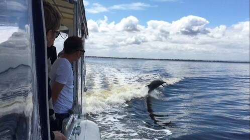 Boating passengers watching a dolphin in Perth