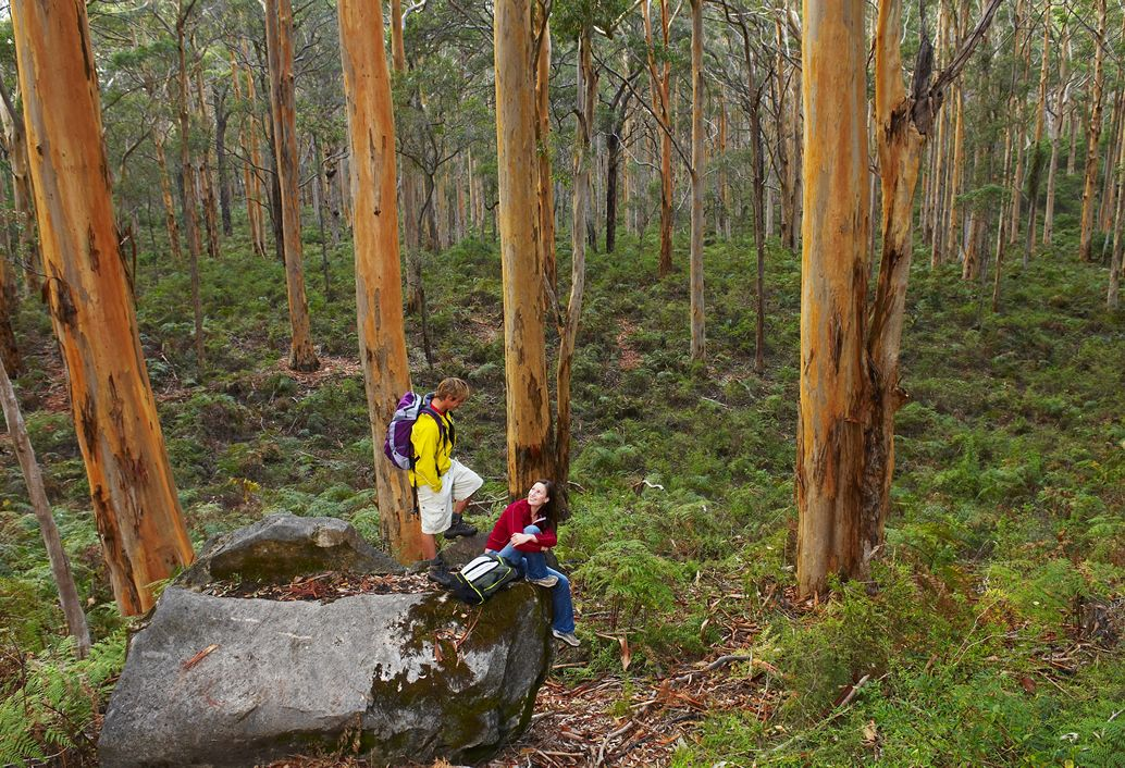People walking through a forest in Perth