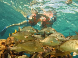 Small-Group Snorkeling Ecofriendly Tour with Sea Turtles