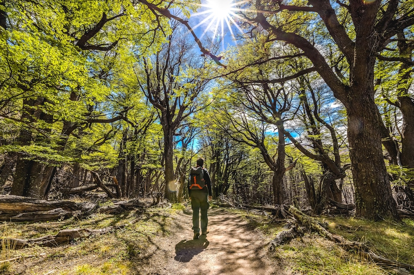 Show item 8 of 8. Man walks through forest in Patagonia, South America