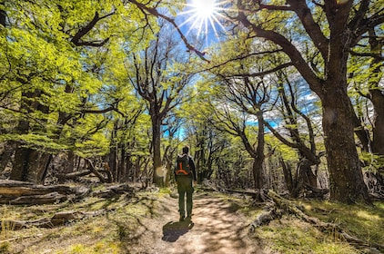 Man walks through forest in Patagonia, South America