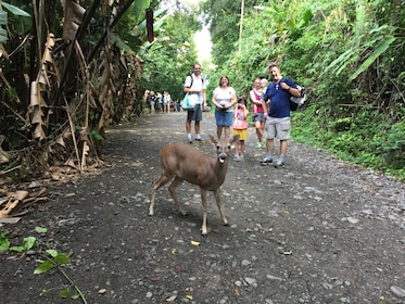 Family watching a deer on a path at Manuel Antonio National Park in Costa Rica