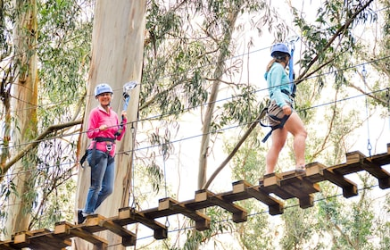 ZIp tour group crosses a rope bridge in a forest canopy