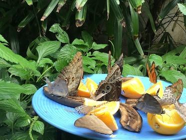 Butterflies at the Niagara Parks Botanical Gardens