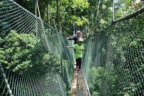 Kuala Lumpur Tropical Rainforest Nature Trail Tour (FRIM)