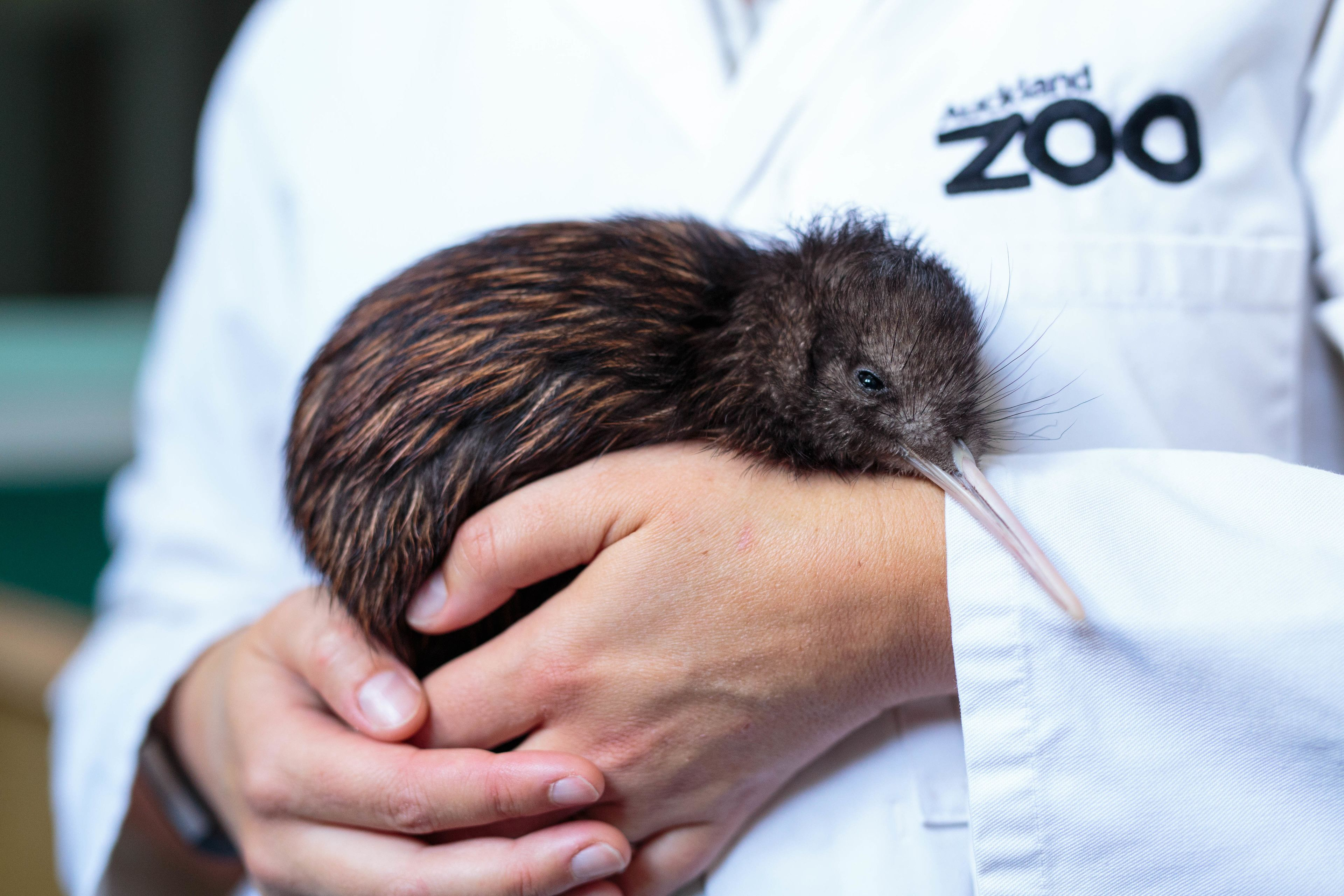 Te Wao Nui - The Living Realm at Auckland Zoo Tickets