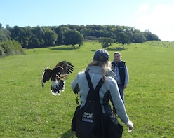 Bath City Tour with Falconry Experience
