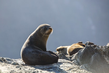 Seals basking on the rocks along the Milford Sound