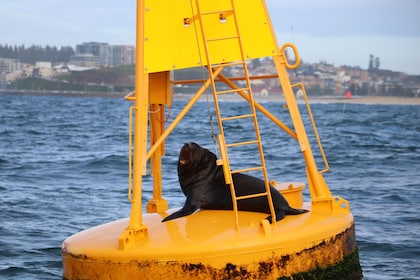 Sea lion on a buoy in New South Wales