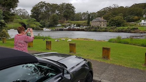 Woman taking picture of geese and a pond in New Zealand