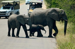 Kruger National Park 2 Days 1 Night Magical Safari