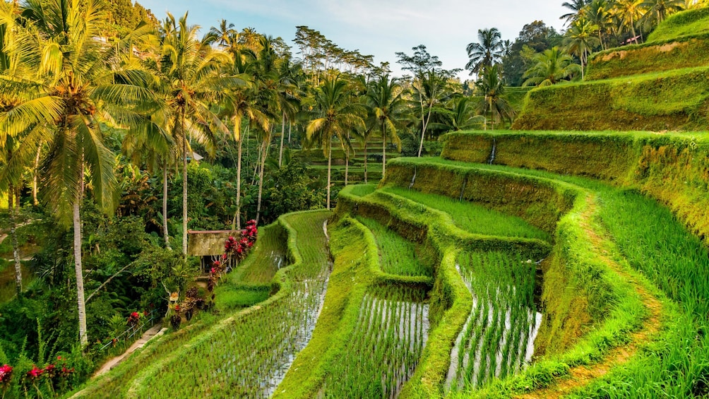 Show item 1 of 8. Best of Ubud Tour: Nature, Temples, Waterfall and Heritage