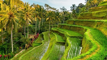 Best of Ubud Tour: Nature, Temples, Waterfall and Heritage