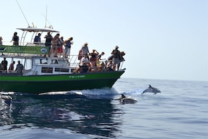 3-Hour Dolphin and Whale Watching by Big Boat in La Palma