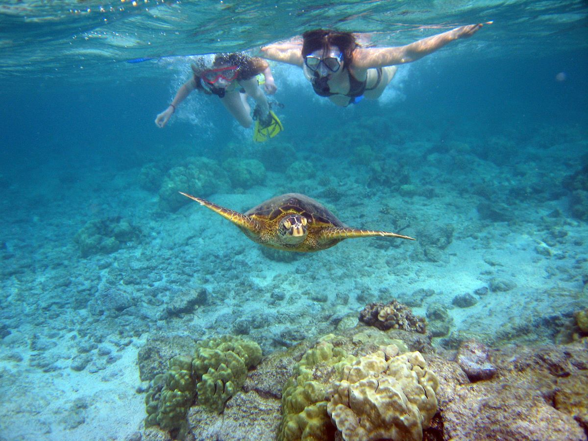 Guided Snorkel Tour - includes 1 week equipment rental!