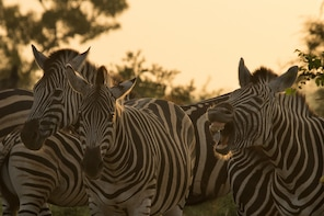 Kruger National Park 3 Day Wild Safari Adventure