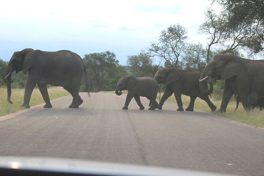Show item 10 of 10. Herd of elephants crossing the road at Kruger National Park in Johannesburg