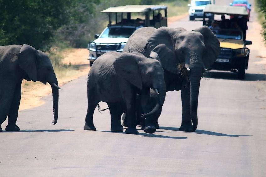 Show item 3 of 10. Kruger National Park 3 Days 2 Nights Magical Safari