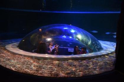 Domed window in a tank at the aquarium in Rio de Janeiro