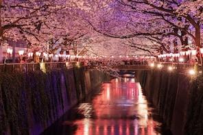 Spring 2020 Tokyo Evening Hanami (Cherry Blossom) Experience