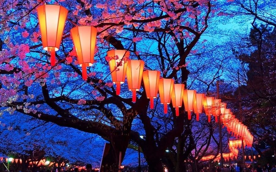 Lanterns in Hanami cherry blossom in Meguro