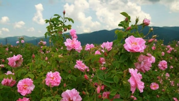 Special offer: The Valley of the Roses & Koprivshitsa