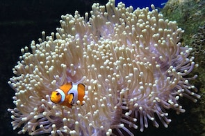 Ticket to Aquarium Lanzarote in Costa Teguise