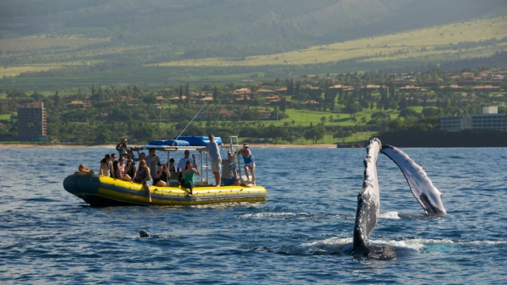 Show item 5 of 8. 2 Hour Small Group Whale Watch Tour