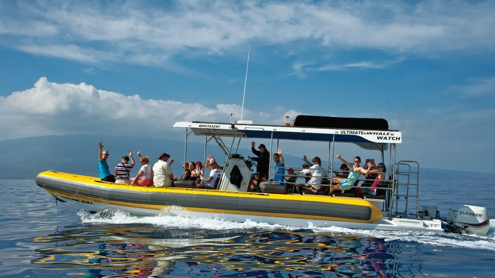 Show item 3 of 8. 2 Hour Small Group Whale Watch Tour