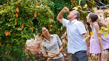 Tropical Fruit World Guided Farm Tour