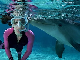 Dolphin Watching + Snorkeling Combined Tour