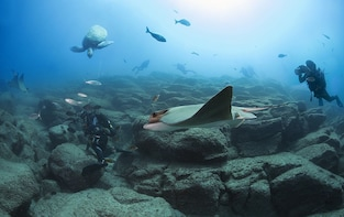 Scuba Diving Submersion for Certified Divers in Tenerife