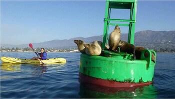 Kayaking Santa Barbara's Waterfront