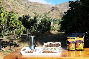 Coffee Production Tour at Finca los Castaños in Gran Canaria
