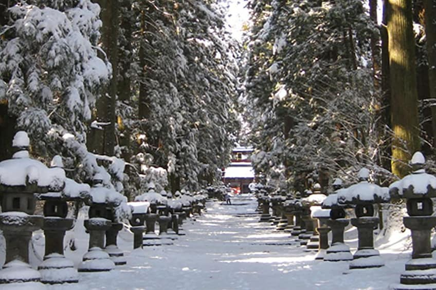 Snow-covered, tree-lined path in Japan