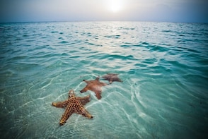 Starfish Point Tour in Grand Cayman