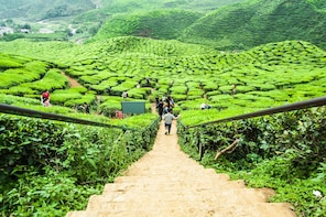 Garden of Nature - Cameron Highlands Full Day Tour