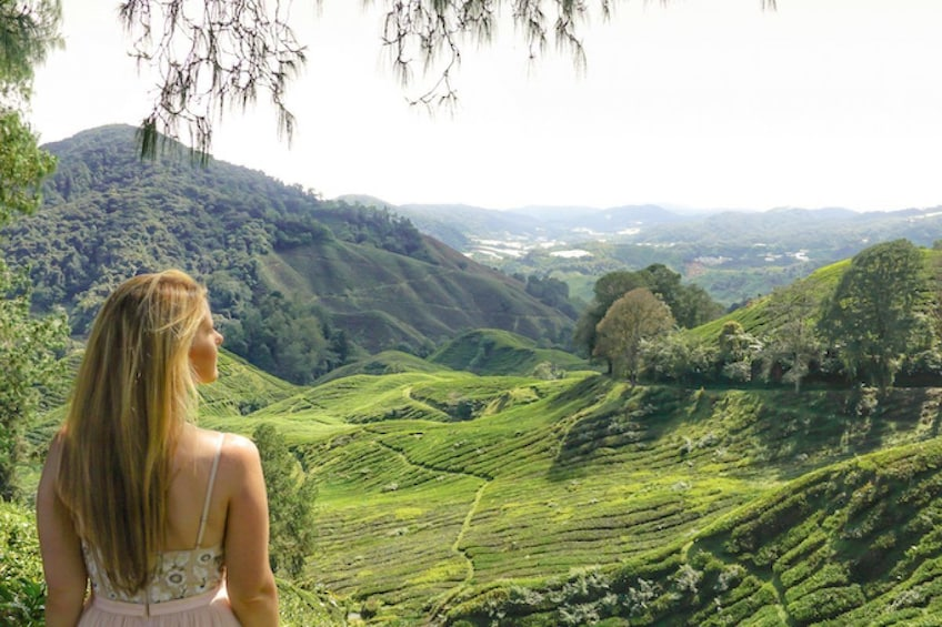 Show item 5 of 7. Woman taking in the sights of the Cameron Highlands
