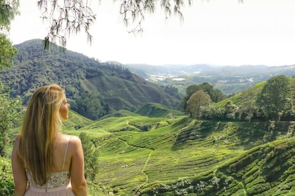 Woman taking in the sights of the Cameron Highlands