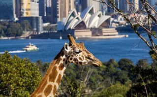 Taronga Zoo Tickets - General Admission