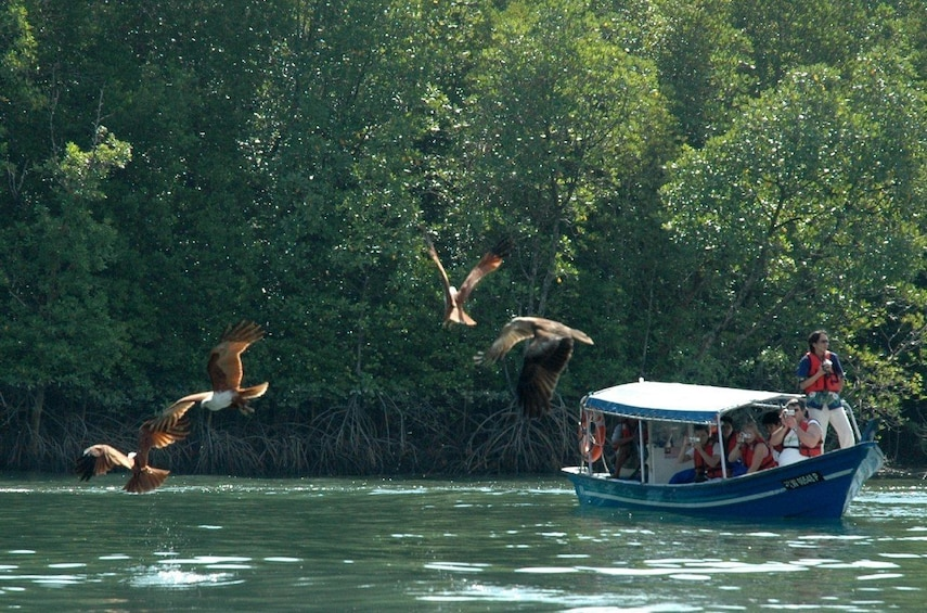 Show item 1 of 4. Group exploring Langkawi Mangrove Forest by boat
