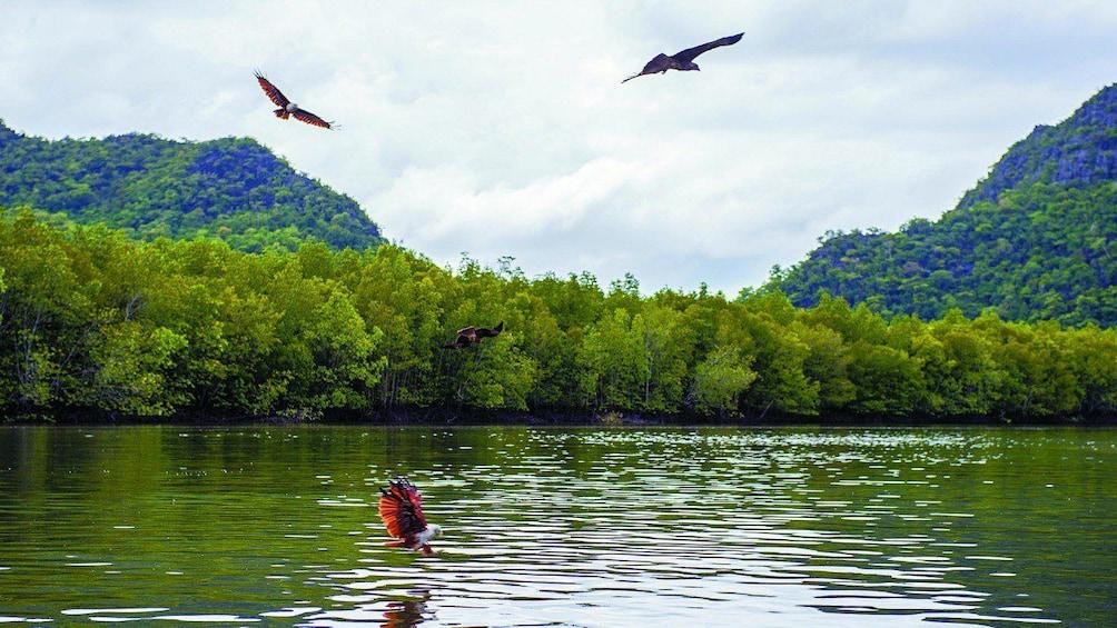 Show item 2 of 4. Langkawi Mangrove Forest