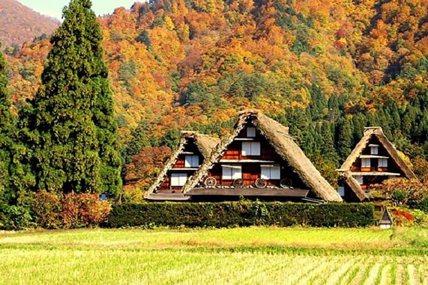 Show item 1 of 7. Shirakawa Village in Japan