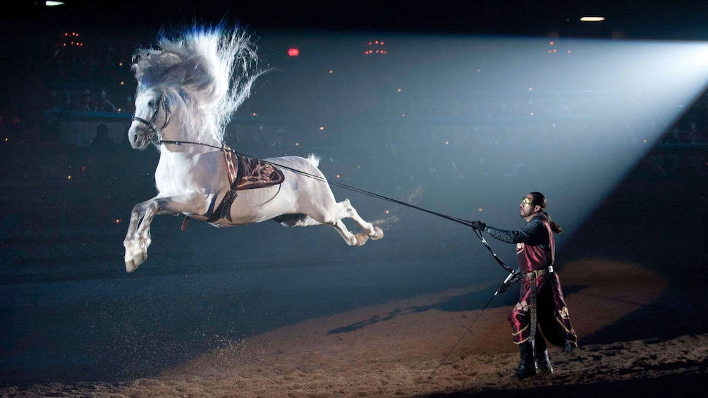 Horse leaping at Medieval Times in Atlanta
