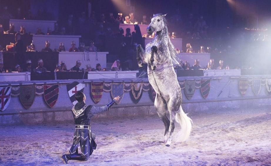 正在顯示第 5 張相片,共 9 張。 Horse trainer and horse at Medieval Times in Atlanta